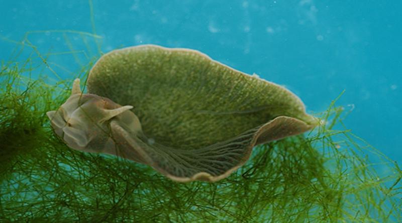 Ljekovita svojstva morskih algi