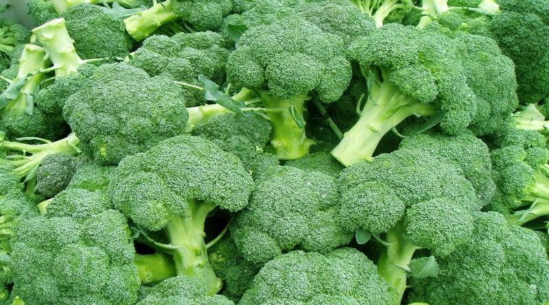 BROKULA,Kaulin, kavolin, Brassica oleracea var.botrytis
