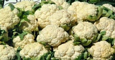 CVJETAČA, Karfiol, kavul, Brassica oleracea var. botrytis