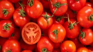 RAJČICA, Crveni patlidžan, paradajz, pomidor, tomat, tomato, Solanum liycopersicum